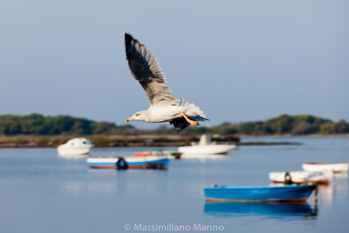 porto-cesareo-mercato-pesce-gabbiano