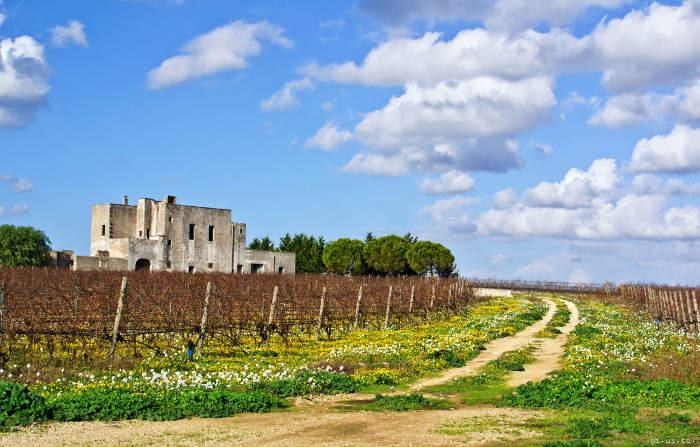 3 wine tour nelle Terre del Negroamaro in Salento