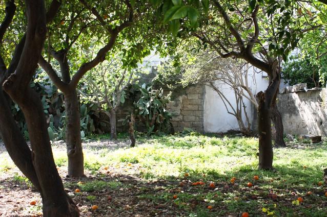 Salento la terra del sole the puglia - Vendita terra da giardino ...