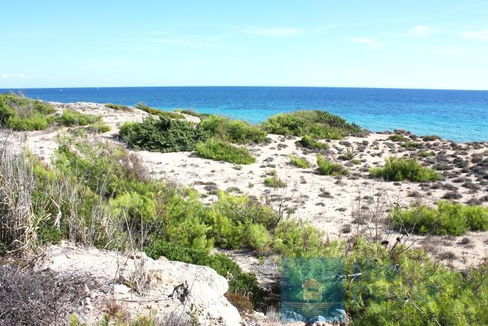 spiaggia-dune-salento-01