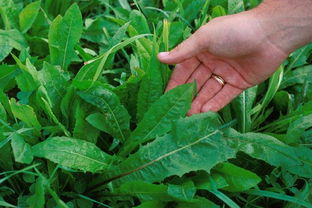 sivoni-puglia-verdure-selvatiche