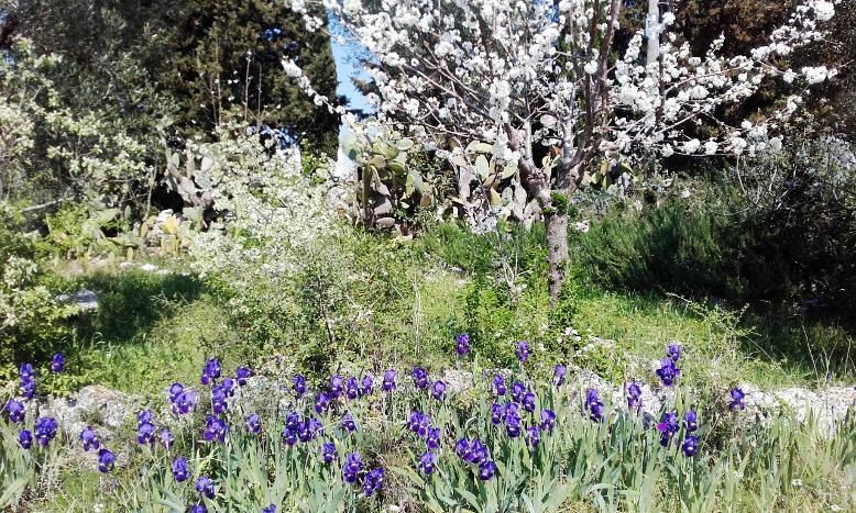 campagna-primavera-fiori