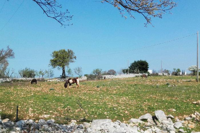 cavalli-campagna-trekking-puglia