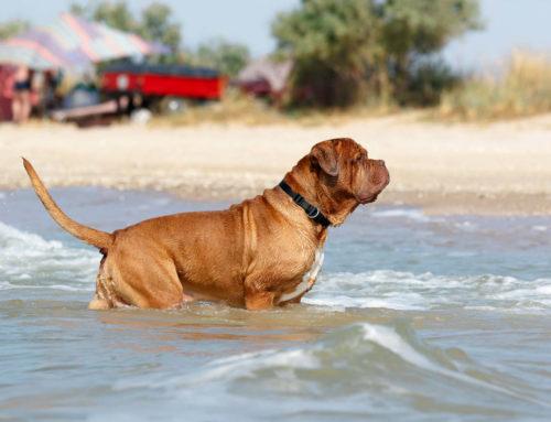 Animali in spiaggia: posso portare il mio cane sulla spiaggia in Salento?